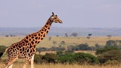 12 Days Spectacular Safari in Uganda