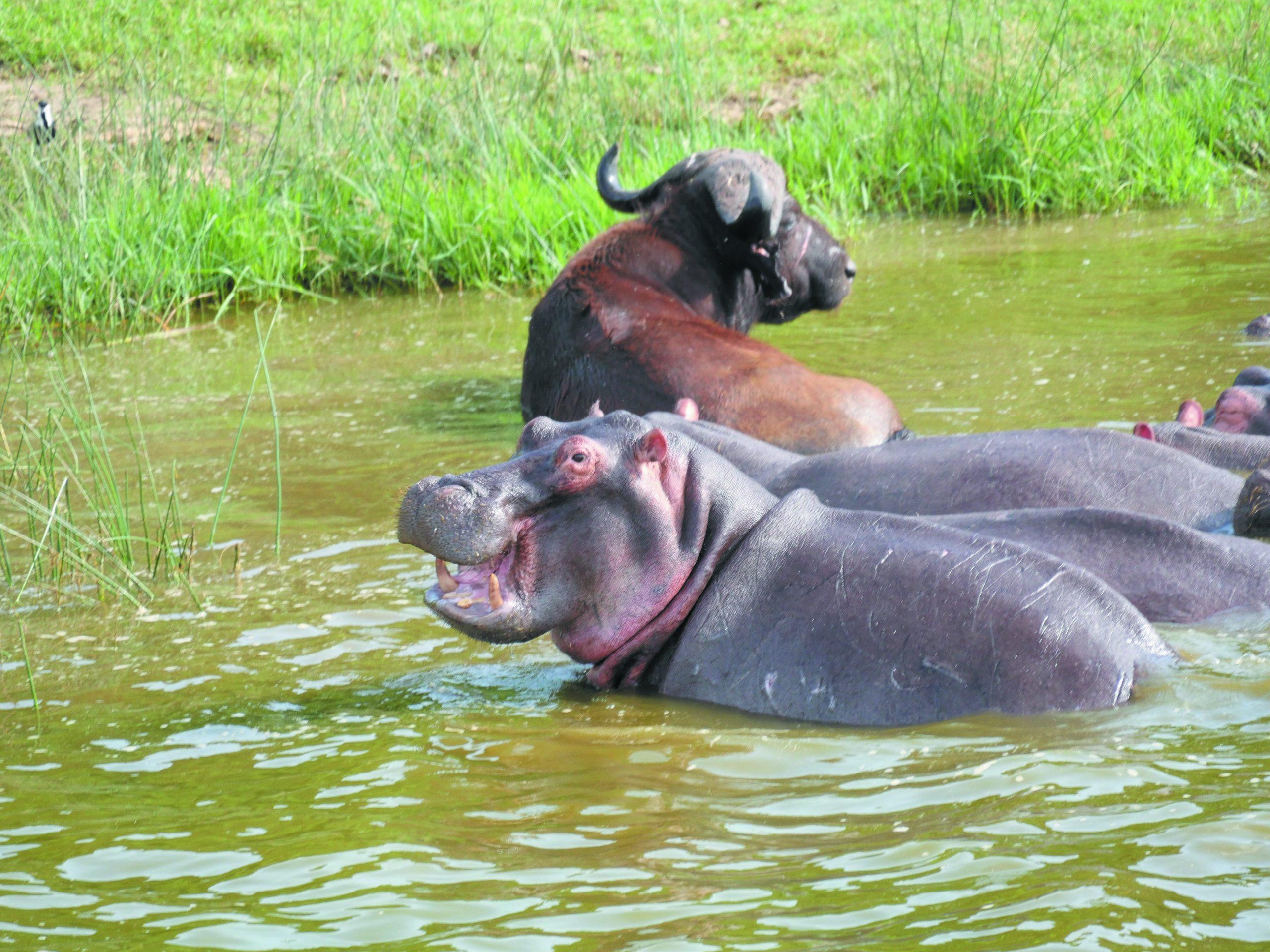 Lake Mburo N P wildlife