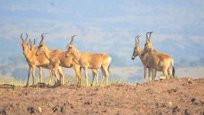 3 Days Safari Kidepo National Park